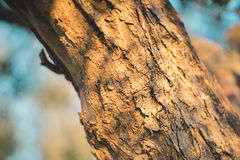 Detail of a tree trunk. At sunrise Stock Photos