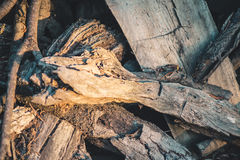 Detail of a tree trunk. At sunrise Royalty Free Stock Photos