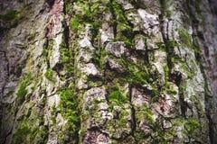 detail treen Royaltyfria Foton