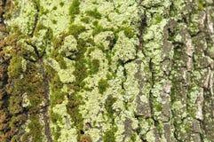 detail treen Arkivbilder