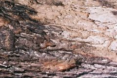 detail treen Royaltyfri Fotografi