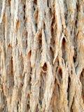detail treen royaltyfri foto
