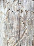 detail treen Arkivfoto
