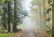 Detail of trees in foggy forest Stock Photo