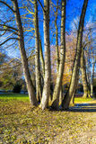 Detail of Trees in a Park in Winter Stock Photography