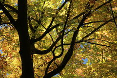 Detail of a treetop in autumn stock photos