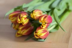 Detail of tulip bouquet, ornamental spring flowers, yellow red flower heads in bloom with leaves. On wooden table in daylight royalty free stock photography