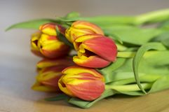 Detail of tulip bouquet, ornamental spring flowers, yellow red flower heads in bloom with leaves. On wooden table in daylight stock photography