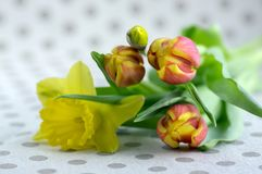 Detail of tulips and daffodils bouquet, ornamental spring flowers, yellow red flower heads in bloom with leaves. On spotted tablecloth royalty free stock photography