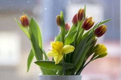 Detail of tulips and daffodils bouquet, ornamental spring flowers, yellow red flower heads in bloom with leaves. On the window stock image