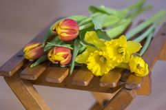 Detail of tulips and daffodils bouquet, ornamental spring flowers, yellow red flower heads in bloom with leaves. On wooden chair stock images
