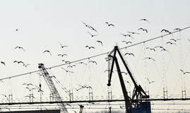 The detail of two the crane with birds. The detail of the crane industry and to convey heavy loads as well as the manipulation of man over nature and help in Stock Photo