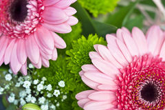 Detail two pink gerbera. Two pink gerbera bouquet of arranging Royalty Free Stock Photos