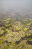 Detail of underwater landscape Royalty Free Stock Photos