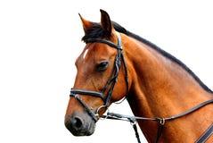 Detail van bautiful Engels paard Royalty-vrije Stock Foto's