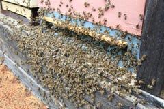 Detail van bijenbijenkorf Stock Foto