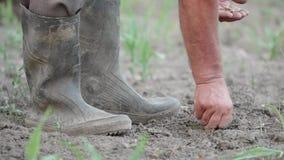 Detail van boerhanden met zaden die in de grond, vuile laarzen planten stock video