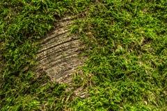 Detail van boom met mos wordt behandeld dat stock afbeelding
