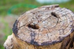Detail van boomboomstam Royalty-vrije Stock Foto's