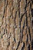 Detail van boomschors Stock Afbeeldingen