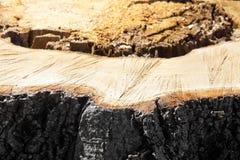 Detail van boomstomp van onlangs gesneden boom Royalty-vrije Stock Foto
