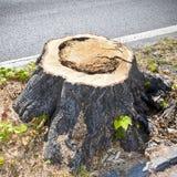 Detail van boomstomp van onlangs gesneden boom Royalty-vrije Stock Afbeeldingen