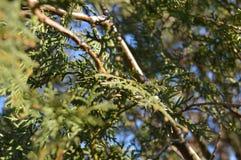 Detail van boomtakken bij de lente royalty-vrije stock foto's