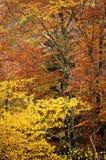 Detail van bos in de herfst Royalty-vrije Stock Foto's