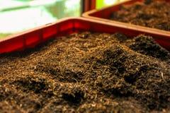Detail van bulk de thee oranje pekoe van Ceylon bladeren die droog in p zijn royalty-vrije stock foto's