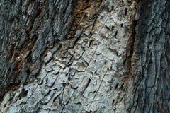 Detail van de boomstam van treestock fotografie