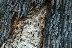 Detail van de boomstam van treeroyalty-vrije stock afbeelding