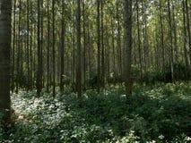Detail van de boomstammen van de boom in het midden van diep bos Stock Afbeeldingen