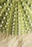 Detail van de buitenmuur van een zeeëgel Royalty-vrije Stock Foto's
