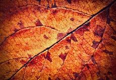 Detail van de droge boom van de herfstbladeren Stock Fotografie