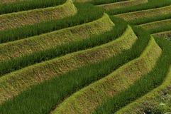 Detail van de mooie Longsheng-Rijstterrassen in de provincie van Guangxi in China Stock Foto's