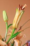 Detail van de oranje Lelie Stock Afbeelding