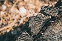 Detail van de schors van een boomstam stock fotografie