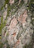 Detail van de schors van een oude boom Royalty-vrije Stock Afbeeldingen
