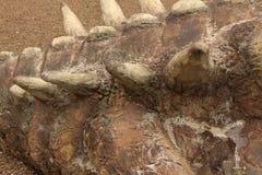 Detail van dinosaurusstaart stock foto