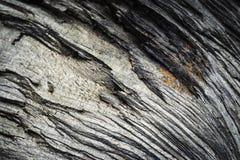Detail van droog gebroken hout Royalty-vrije Stock Afbeeldingen