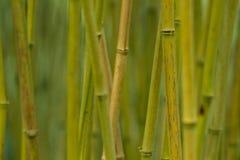 Het bosjeachtergrond van het bamboe Stock Afbeeldingen