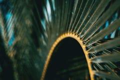 Detail van een blad van canariensis van Phoenix royalty-vrije stock foto
