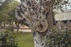 Detail van een boomstam van een boom stock foto's