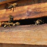 Detail van een houten bijenbijenkorf met vliegende bijen Stock Foto's