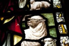 Detail van een lam in een gebrandschilderd glasvenster in Crowland-Abdij, Cr royalty-vrije stock afbeelding