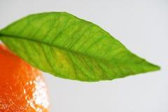 Detail van een mandarin blad Royalty-vrije Stock Afbeelding