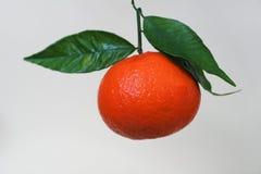 Detail van een mandarin blad Royalty-vrije Stock Fotografie