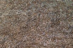 Droge textuur van riet royalty vrije stock afbeeldingen afbeelding 15738899 - Riet voor struik ...
