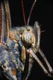 Detail van een mooie tropische vlinderzitting op een groen blad Stock Foto's