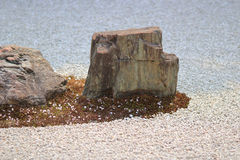 Detail van een rotstuin bij de tempel Ryoan -ryoan-ji in Kyoto, Japan Royalty-vrije Stock Foto's